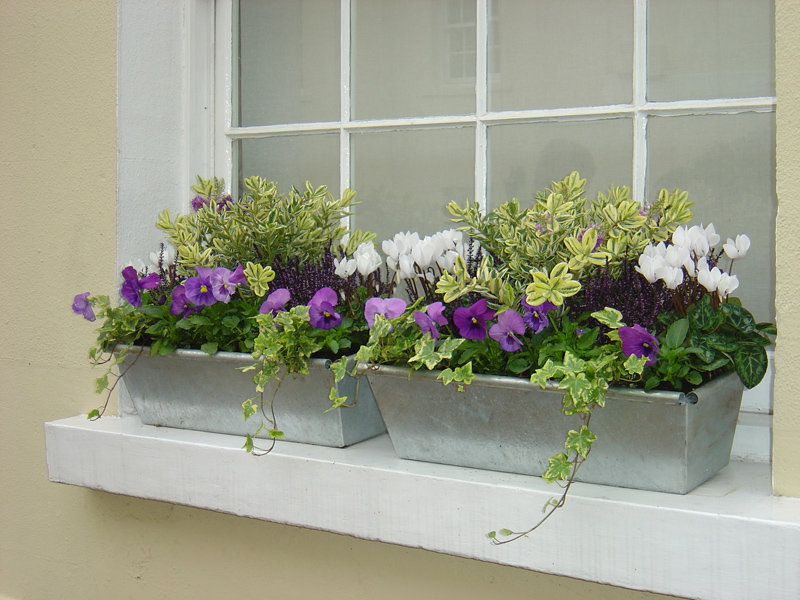 Patio Container Flowers