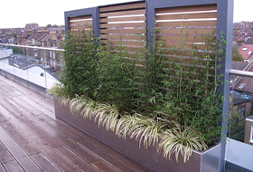 bamboo-and-carex-terrace